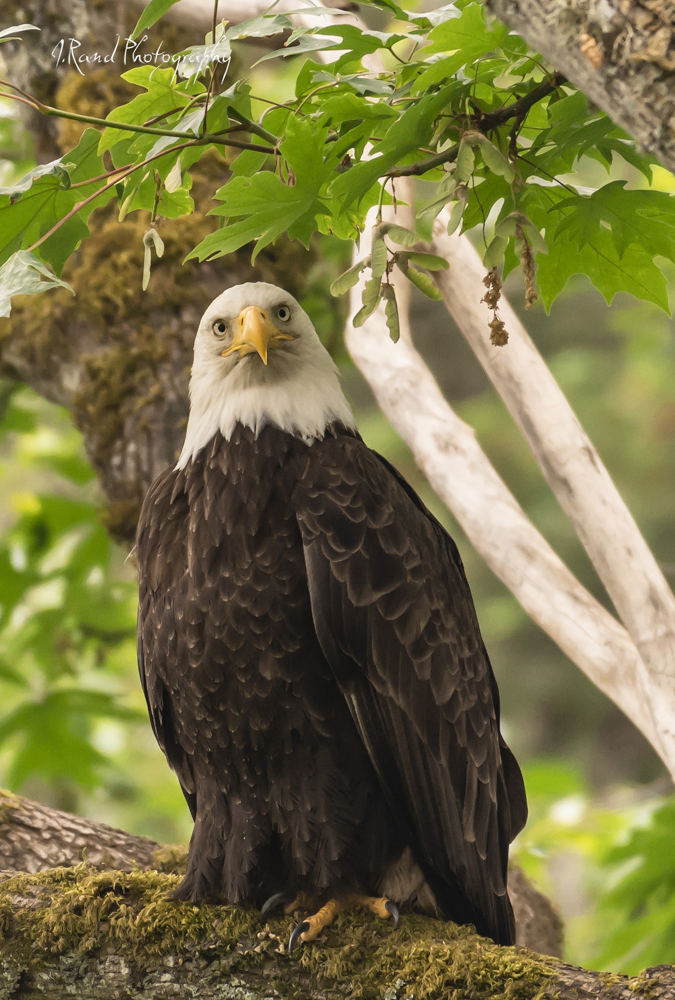 Eagle, Lilly Point